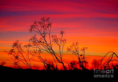 Sunset Silhouette Art Print by Patrick Witz