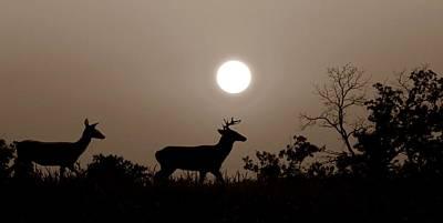 Sunset Silhouette S Print by David Dehner