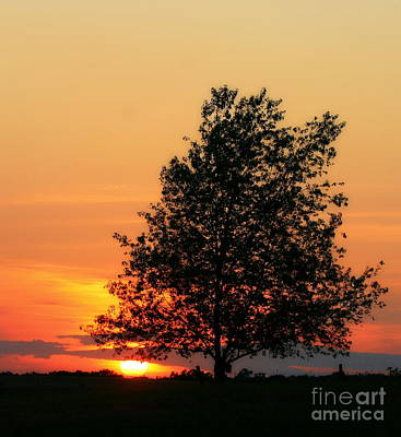 Photograph - Square Photograph Of A Fiery Orange Sunset And Tree Silhouette by Angela Rath