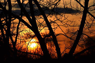Photograph - Sunset Through The Trees by Bonnie Myszka