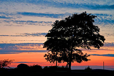 Photograph - Sunset Tree by David Freuthal