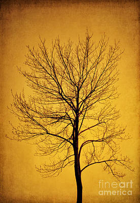 Photograph - Sunset Tree Silhouette by Cheryl Davis