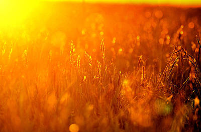 Photograph - Sunset Wheaties by Emily Stauring