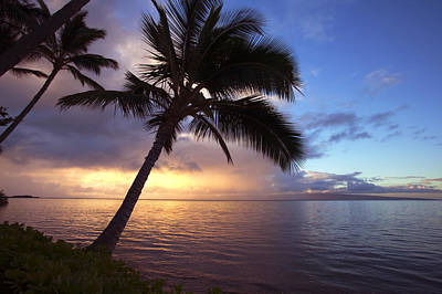 Photograph - Sunset With Palms by Ron Dahlquist - Printscapes