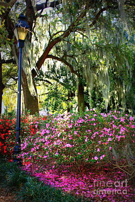 Photograph - Sunshine Through Savannah Park Trees by Carol Groenen
