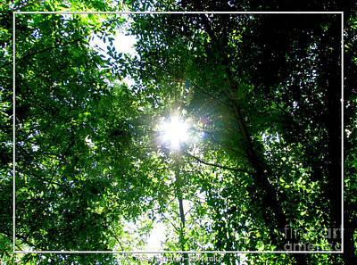 Photograph - Sunshine Through Trees by Rose Santuci-Sofranko