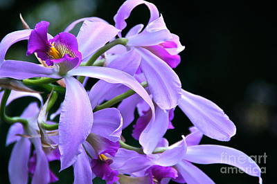 Photograph - Super Orchid by Byron Varvarigos