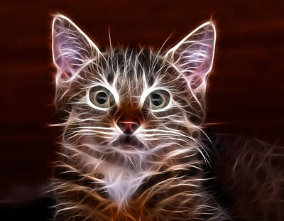 Kitten Digital Art - Suprise by Tilly Williams