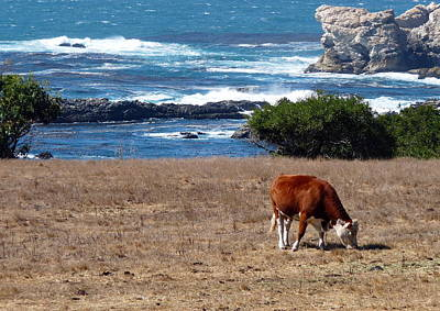 Photograph - Surf And Turf  by Jeff Lowe