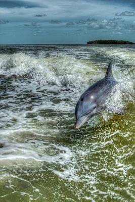 Surfing Dolphin Art Print