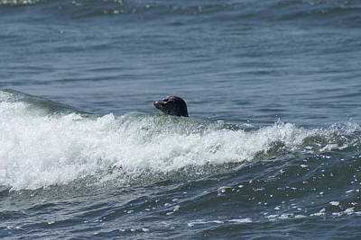 Surfing Seal Art Print by Jerry Cahill