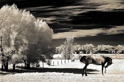 Photograph - Surreal Fantasy Horse Landscape by Kathy Fornal