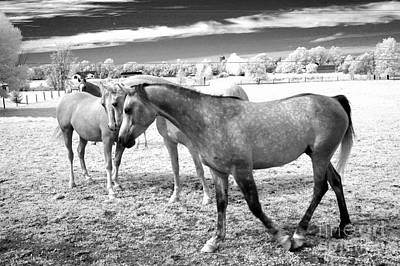 Photograph - Surreal Infrared Black White Horses Landscape by Kathy Fornal