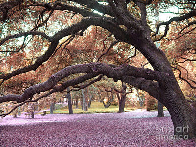 Surreal Dreamy Nature Photograph - Surreal Old Oak Tree South Carolina Fall Colors by Kathy Fornal