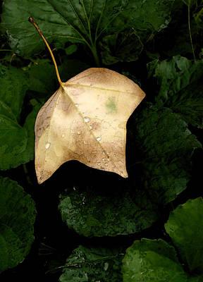 Suspended Leaf Art Print by Glenn Donze