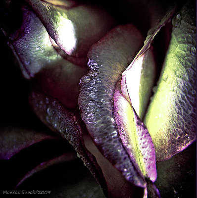 Photograph - Sustain by Monroe Snook