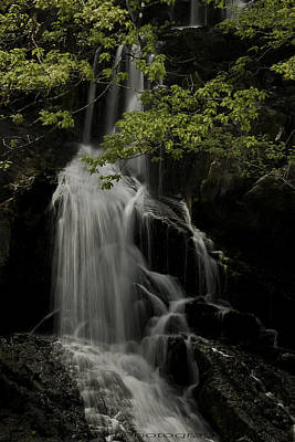 Photograph - Swallow Falls by Beverly Cash