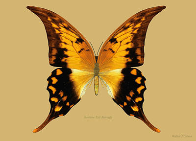Digital Art - Swallow Tail Butterfly by Walter Colvin
