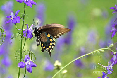 Photograph - Swallowtail And Delphiniums by Byron Varvarigos