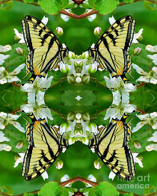 Photograph - Swallowtail Supreme  by Whispering Feather Gallery