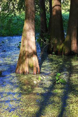 Photograph - Swamp Blue by Rdr Creative