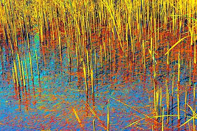 Photograph - Swamp Colors by Beth Akerman