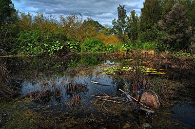 Photograph - Swamp Lagoon by Tim Nichols