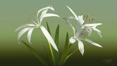 Photograph - Swamp Lily Blossoms by IM Spadecaller
