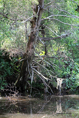 Photograph - Swamp Tree by Deborah Hughes