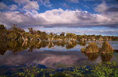 Australia Digital Art - Swampland Reflections by Heather Thorning