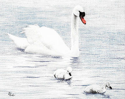 Drawing - Swan Family by Brent Ander
