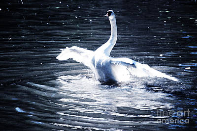 Swan Art Print by HD Connelly