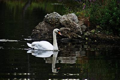 Photograph - Swan I by Joe Faherty