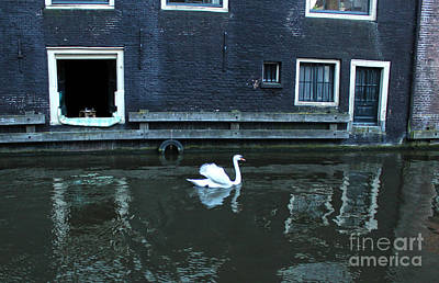 Swan In Amsterdam Canal Art Print by Gregory Dyer