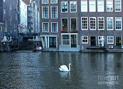 Swan In Amsterdam Art Print by Gregory Dyer
