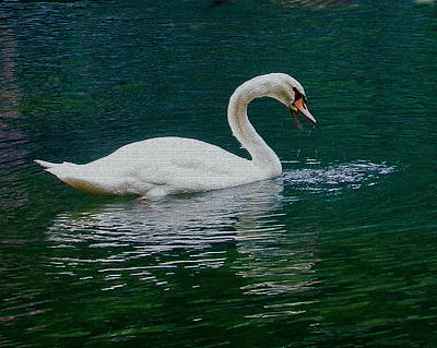 Photograph - Swan In Blue And Green by Judy Wanamaker