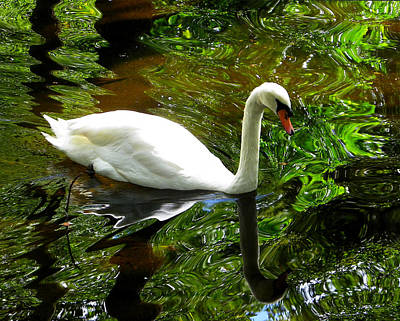 Photograph - Swan In Green Reflection by Judy Wanamaker