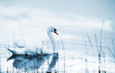 Swan Art Print by Jaroslaw Grudzinski