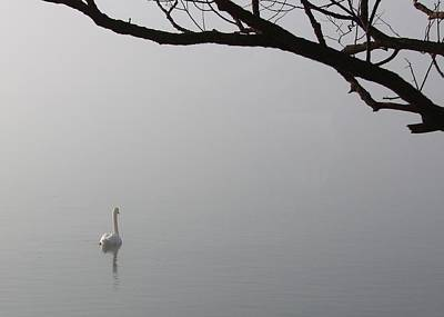 Photograph - Swan Lake by Davandra Cribbie
