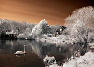Photograph - Swan Lake by Steve Zimic