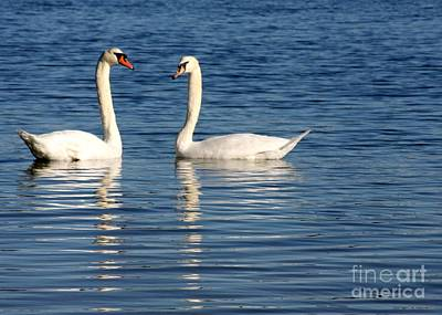 Photograph - Swan Mates by Sabrina L Ryan