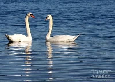 Photograph - Swan Mates by Sabrina L Ryan