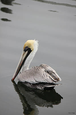 Photograph - Swan Of The Gulf Coast by Deborah Hughes