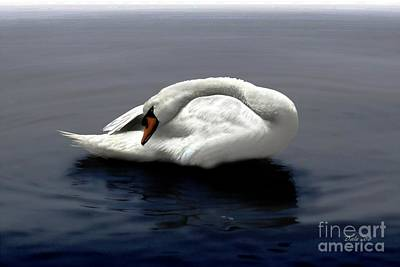 Digital Art - Swan Posing by Dale   Ford