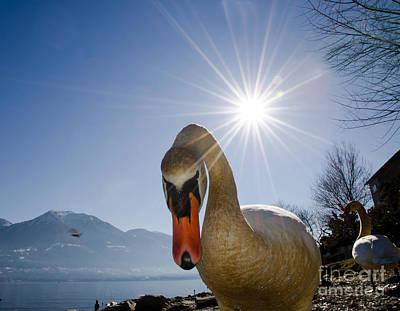 Swan Saying Hello Art Print