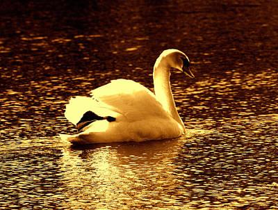 Swan Song 3 Art Print by Aron Chervin