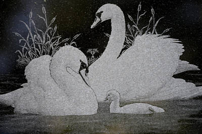 Swans And Baby Original