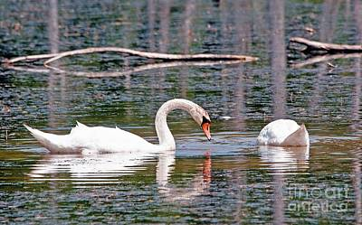 Swans At Lunch Art Print by Bob Niederriter