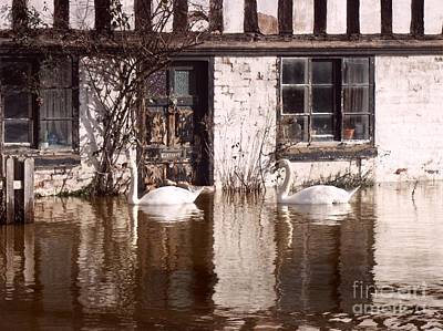 Photograph - Swans At The Door by Ed Lukas