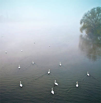 Of Birds Photograph - Swans In Log On River Neckar by Ulrich Mueller
